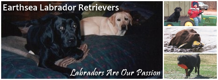 Earthsea Labrador Retrievers